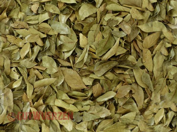 Curryblätter, im Ganzen